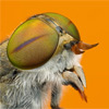 FotoVýzva Digimanie: vyhodnocení 9. kola Makro hmyzu
